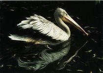 Pelikan von pahit
