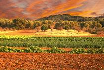 Landschaft auf Mallorca by pahit