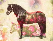 Pura Raza, PRE stallion von pahit