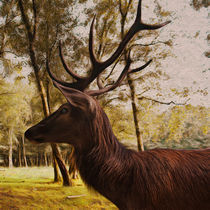 Hirsch im lichten Birkenwald von pahit