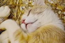 Kleine Katze träume süß! von pahit