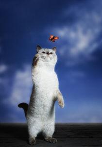 Schmetterlingsjäger von Tim Bromberg