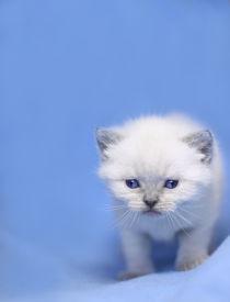Little Baby von Tim Bromberg