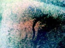 seltsame gestalten in nebelwelt von lisa winter