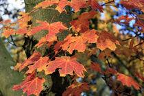 Herbstlaub von jackness