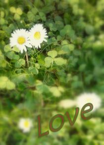flowers in love by extracart