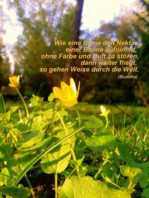 weise sein by extracart