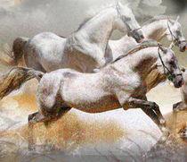 horses by nora gharbi