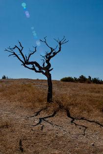 Dead tree under the sun. by safaribears