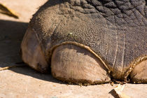 Foot Fetish by safaribears