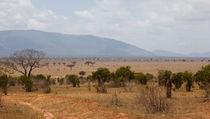 Tsavo East von safaribears