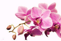 2011-01-12-16-14-43dsc-4764-orchid-retro-sig