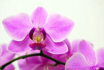 2011-01-12-16-24-06dsc-4788-orchidee-2-sig