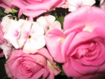 Pink Roses von Anne Rösner-Langener