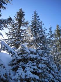 Winter in den Bergen von Anne Rösner-Langener