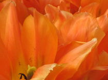 Ausschnitt in Orange von Anne Rösner-Langener