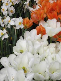 Flowers von Anne Rösner-Langener