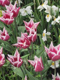Blumen aus Frühlingsbeet von Anne Rösner-Langener