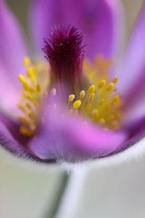 FlowerPower von bilderkost