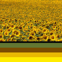Colours of Sunflowers von safaribears