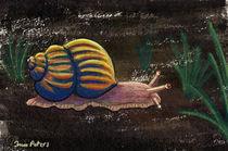 Koenigsschnecke bei Nacht by Ina Peters
