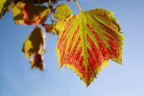 Herbstzeit von Andrea Meyer