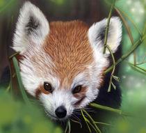 Red Panda by sujesh