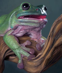 Frog by sujesh