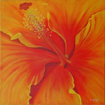 Hibiskusblüte von Petra Koob