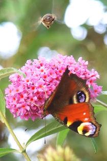 Schmetterling und Hummel von memmi