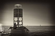 The sea-lion's sunbathe (Sepia Version) by Ahmed Kamal