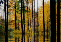Waldlichtung mit Seeblick by regenbogenfloh