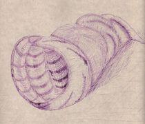 Muschel by Oleg Kappes