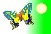 butterfly by Erwin Burgstaller