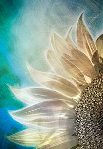 Sonnenblume by Städtecollagen Lehmann