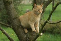 Kater im Baum by Ina Hartges