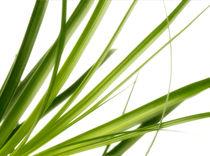 Gras  by Städtecollagen Lehmann