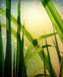 Reed Green von Städtecollagen Lehmann