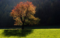 Colors in the light von Wolfgang Dufner