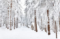 'Winterwald' von Wolfgang Dufner