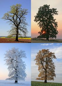 'Jahreszeiten' von Wolfgang Dufner