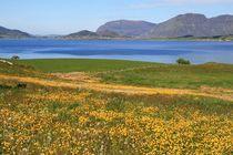 Wiese blühen, norwegische Landschaft am Wasser von fotodil