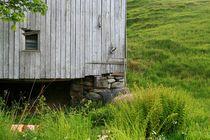Hütte aus Holz an mit Gras bewachsen Hügel, Detail von fotodil