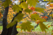 Herbst-4 by Regine Christiansen
