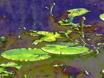 Teich Idylle von aw-anja-bronner-art