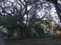 Mein Freund der Baum by tinta3