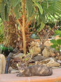 Ein Platz unter Palmen by tinta3