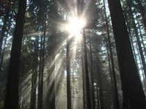 Licht im Wald by Marion Gaber