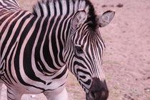 Zebra von Sabine Zankl