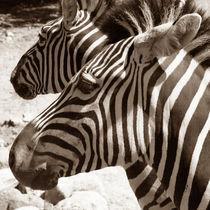 Zebras by Sabine Zankl
